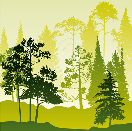 vector landscape with pine and fir trees, abstract nature background, forest template, hand drawn illustration Illustration
