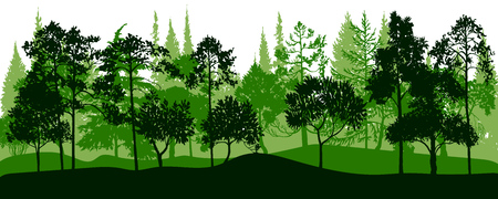 vector landscape with pine and fir trees, abstract nature background, forest template, hand drawn illustration Vettoriali
