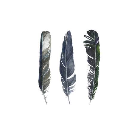 watercolor drawing feathers isolated at white background