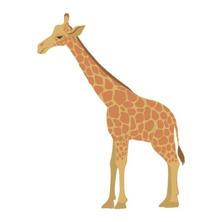 vector cartoon giraffe
