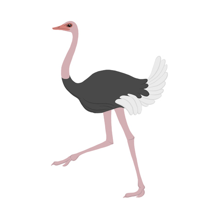 vector cartoon ostrich Illustration