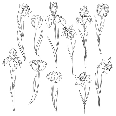 vector drawing flowers of narcissus, tulips and irises isolated floral element, hand drawn illustration