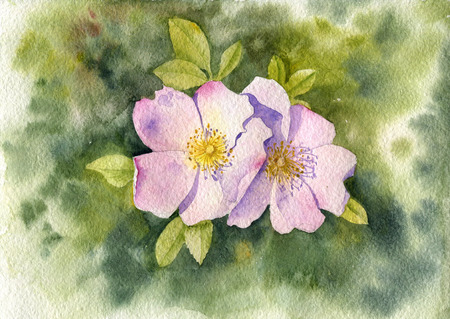 watercolor pink dogrose blossoms