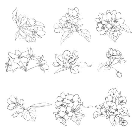 Apple blossoms vector illustration. 일러스트