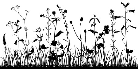 Vector il fondo con la siluetta delle piante selvatiche, delle erbe e dei fiori, l'illustrazione botanica, modello floreale naturale Vettoriali