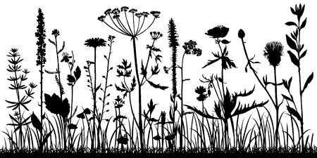 Tło z sylwetka dzikich roślin, ziół i kwiatów, ilustracja botaniczna, naturalny szablon kwiatowy