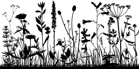 Vector background with silhouette of wild plants, herbs and flowers, botanical illustration, natural floral template