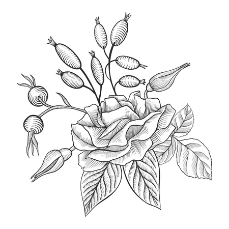 vintage vector floral composition with flower of rose, berries and leaves, imitation of engraving, hand drawn design element