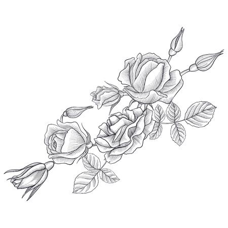 vintage vector bloemen compositie met bloemen, knoppen en bladeren van rozen, imitatie van gravure, hand getrokken ontwerpelement