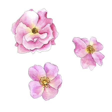 watercolor drawing rose