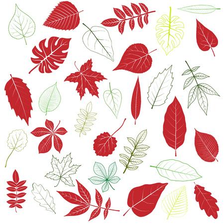 Pattern of tree leaves