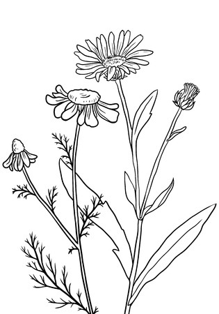 Vector hand drawn medical herbs, line drawing plants, floral background