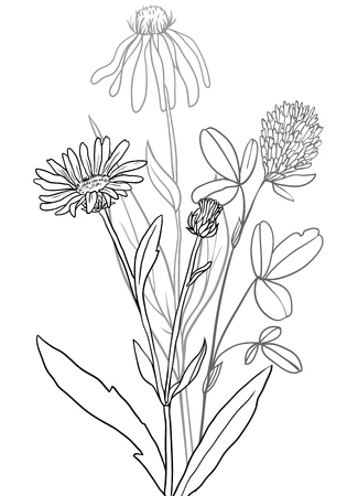 Vector of medical plants.