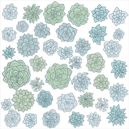 Hand drawn vector succulents.
