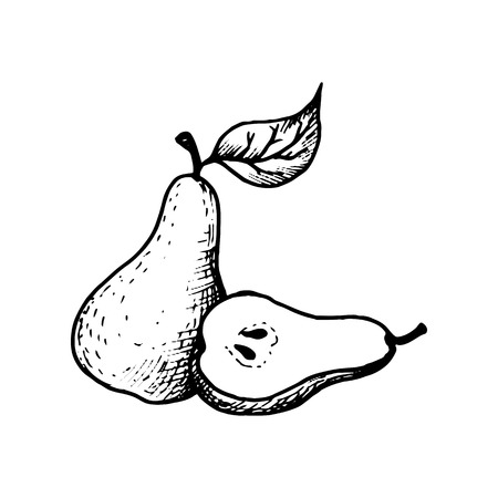 vector ink drawing of pear