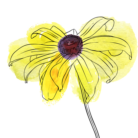 vector drawing flower of rudbeckia on white background.