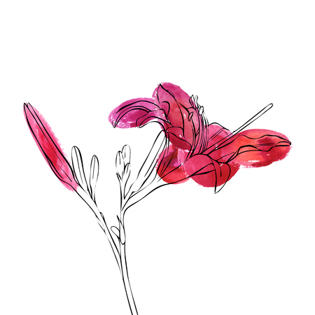 vector drawing pink lily flower, floral element with watercolor spots, hand drawn illustration