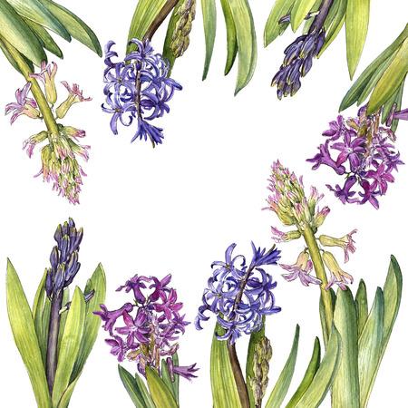 watercolor drawing hyacinth flower Banco de Imagens - 97547020