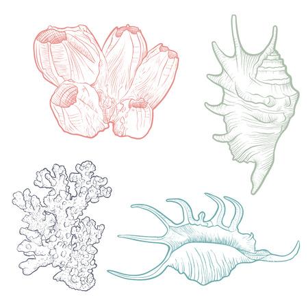 hand drawn vector seashells template set Illusztráció