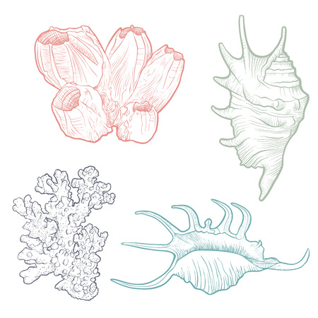 hand drawn vector seashells template set Vettoriali