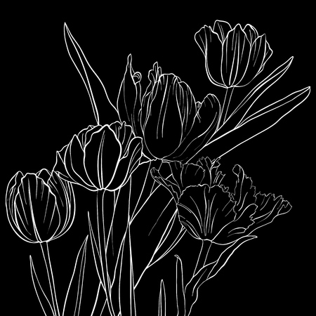 Vector drawing flowers of tulip illustration on black background.