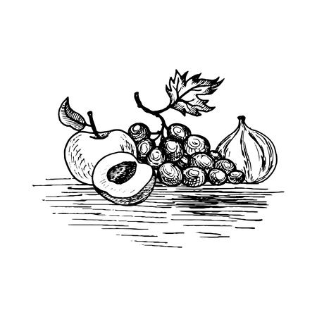 A vector ink drawing grape