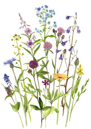Fondo con flores acuarelas