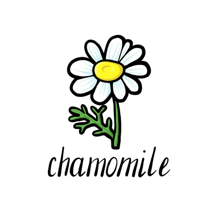 vector doodle flower of chamomile, hand drawn illustration