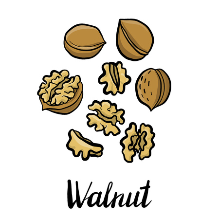 vector drawing walnuts Stok Fotoğraf