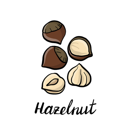 vector drawing hazelnuts