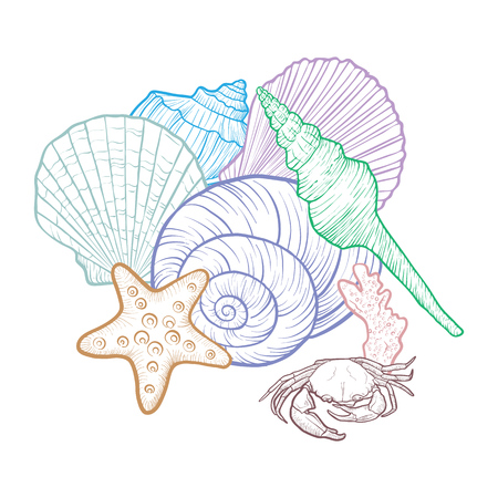 vector background with seashells , hand drawn illustration, sea composition