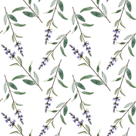 Seamless pattern with plants of salvia