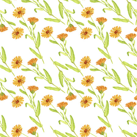 Seamless pattern with drawing plant of calendula
