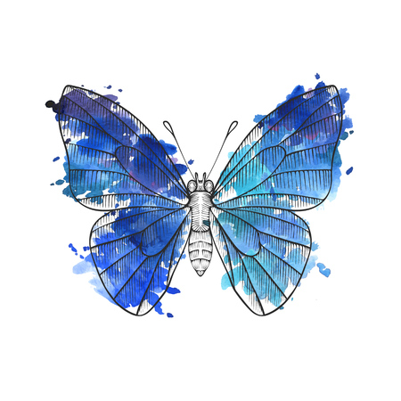 vector drawing butterfly Stock Vector - 103125287