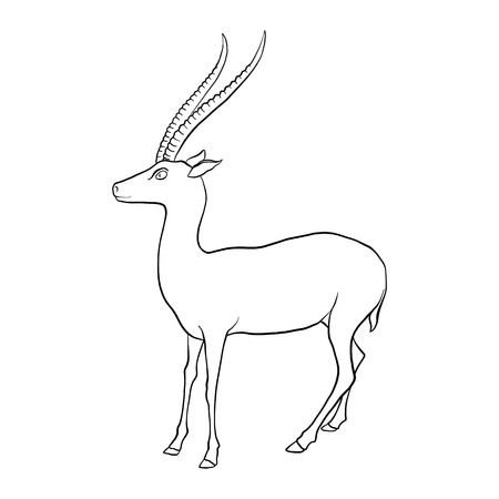 vector drawing antelope
