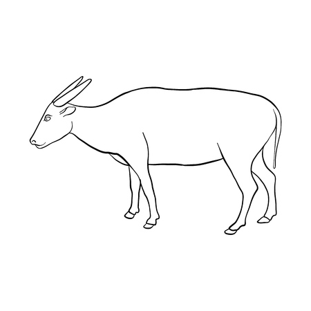 vector drawing buffalo