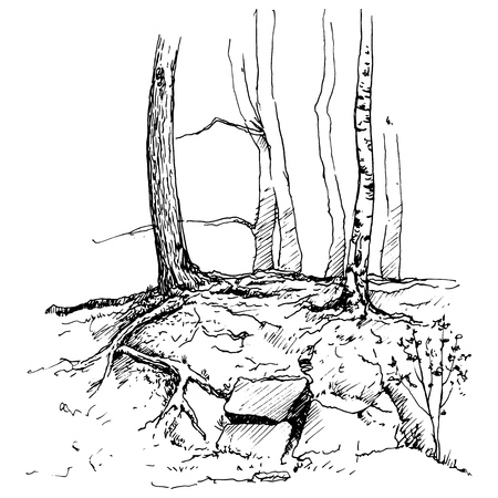 vector sketch of tree trunks and rocks, hand drawn illustration Vecteurs