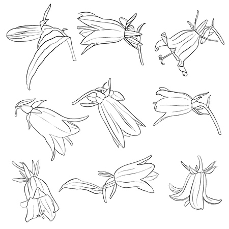 vector set of drawing bell flowers, floral elements, hand drawn botanical illustration