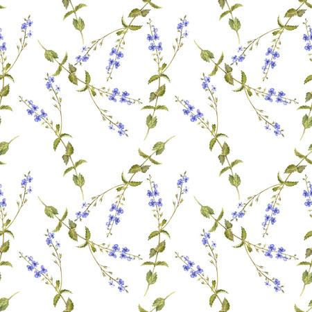 Flower of birds-eye speedwell pattern