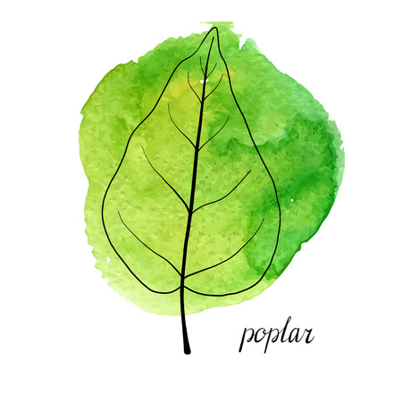 vector leaf of poplar tree at green watrcolor paint stains, hand drawn illustration