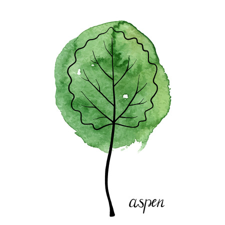 vector leaf of aspen tree at green watrcolor paint stains, hand drawn illustration