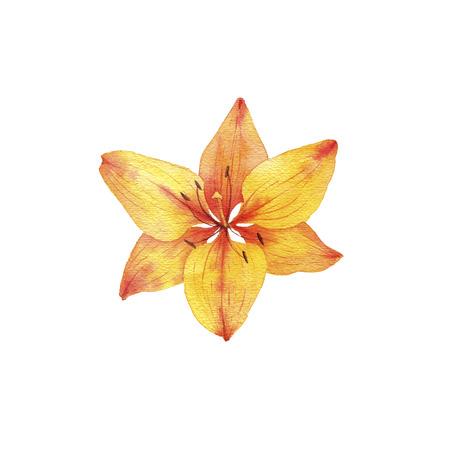 watercolor drawing flower Foto de archivo