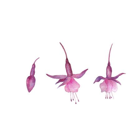 Aquarell Zeichnung Blumen