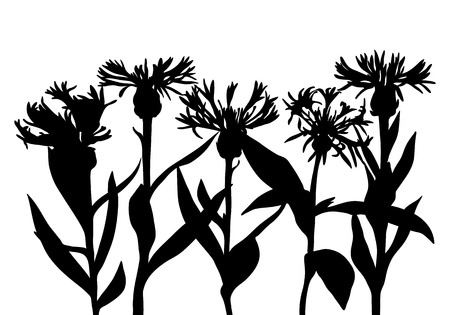 vector silhouettes of cornflowers, floral composition, hand drawn botanical illustration