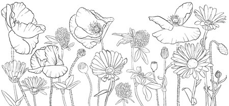 vector drawing wild flowers, poppies, daisies and cornflowers, floral composition, hand drawn illustration