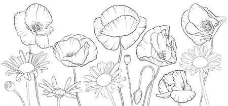 vector drawing poppies and daisy flowers, floral composition, hand drawn illustration