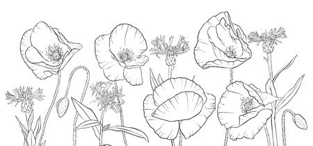 vector drawing poppies and cornflowers, floral composition, hand drawn illustration