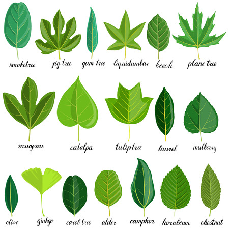vector green leaves of different trees isolated at white background, hand drawn illustration