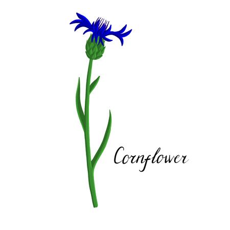 vector plant of cornflower