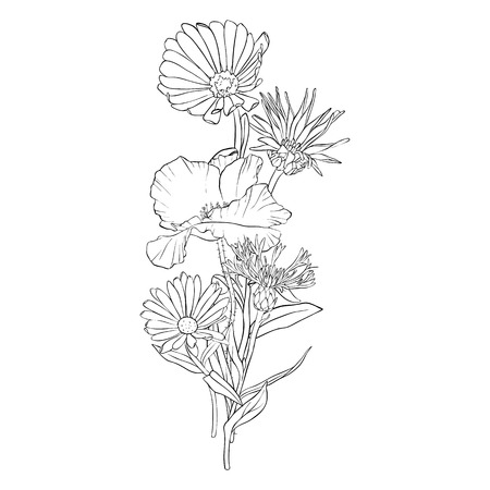 vector drawing boquet of wild flowers, poppies, daisies and cornflowers, floral composition, hand drawn illustration